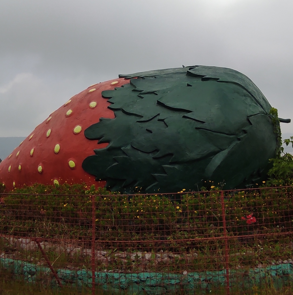 Strawberry farm in Baguio City Philippines